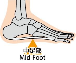 Mid-Foot(中足部)